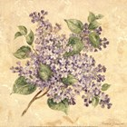 Lilac by Pamela Gladding art print