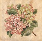 Hydrangea by Pamela Gladding art print