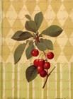 Botanical Cherries art print