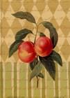 Botanical Peaches art print