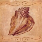 Conch by Shari White art print