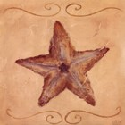 Starfish by Shari White art print