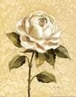 Elegant Rose by Silvia Vassileva art print