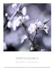 Cherry Blossoms II by Heather Johnston art print