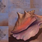 Sanibel Conch - Mini by Paul Brent art print