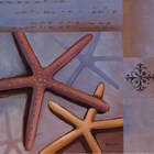 Sanibel Starfish - Mini by Paul Brent art print