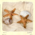 Shells III by Judy Mandolf art print