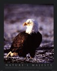 Bald Eagle by John Pezzenti jr art print