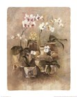 Arrangement of Orchids II-11x14 by Cheri Blum art print