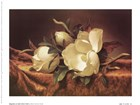 Magnolia On Gold Velvet Cloth by Martin Johnson Heade art print