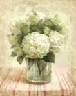 Cottage Hydrangeas in White by Danhui Nai art print