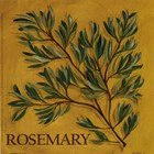 Rosemary by Kate McRostie art print