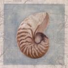 Framed Shells I by Gaetano Art Group art print
