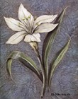 White Lilly by Kate McRostie art print