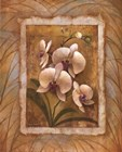 Illuminated Orchid II by Elaine Vollherbst-Lane art print