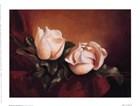 Magnolia Vignette ll by Fran Di Giacomo art print