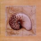 Sea Treasures II by Janet Kruskamp art print