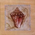 Sea Treasures III by Janet Kruskamp art print