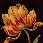 Fleur Rouge Et Jaune by Constance Lael art print
