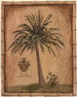 Caribbean Palm III With Bamboo Border by Betty Whiteaker art print