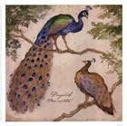 Peafowls by Betty Whiteaker art print