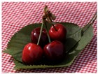 Morello Cherries I by Martina Schindler art print
