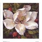 Magnolia Square ll by Barbara Mock art print