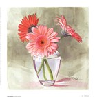 Coral Gerbera by Mary Kay Krell art print