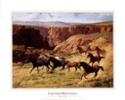 Canyon Mustangs by John Leone art print