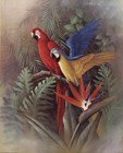 Exotic Birds by T.C. Chiu art print