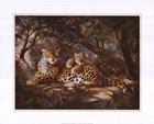 Leopard with Cub by Elvira Duran art print