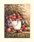Pail of Apples by Peggy Thatch Sibley art print