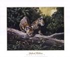 Bobcat Kittens by Don Balke art print