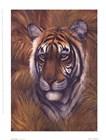 Safari Tiger by Joe Sambataro art print